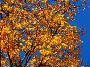 autumn-63271_1920_800_600