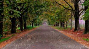 autumn-1760115_1920_800_443