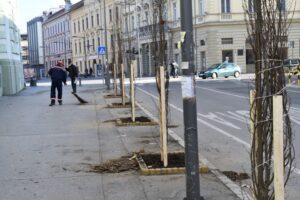sadnja-drveca3_800_533