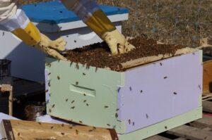 beekeeping-1537156_1280_800_531