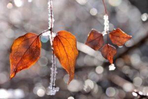 autumn-colors-1752931_1920_800_533